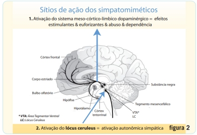mecanismo ação simpatomiméticos